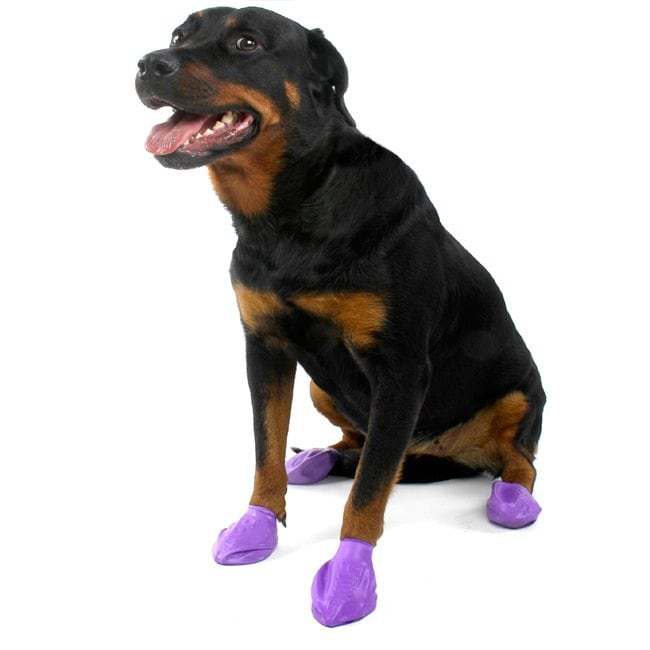Protective shoes 12-pack Pawz 8f87ddfe23a7
