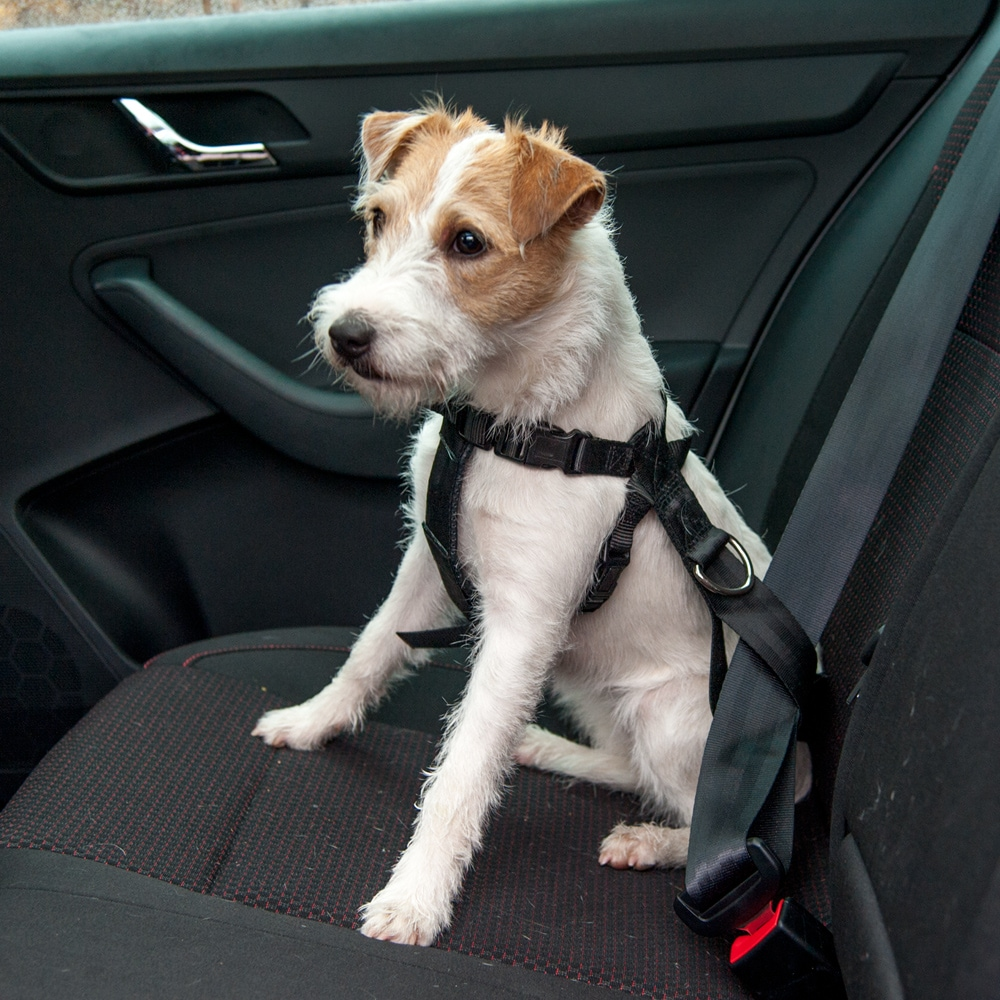 Car harness for dogs   Showmaster®