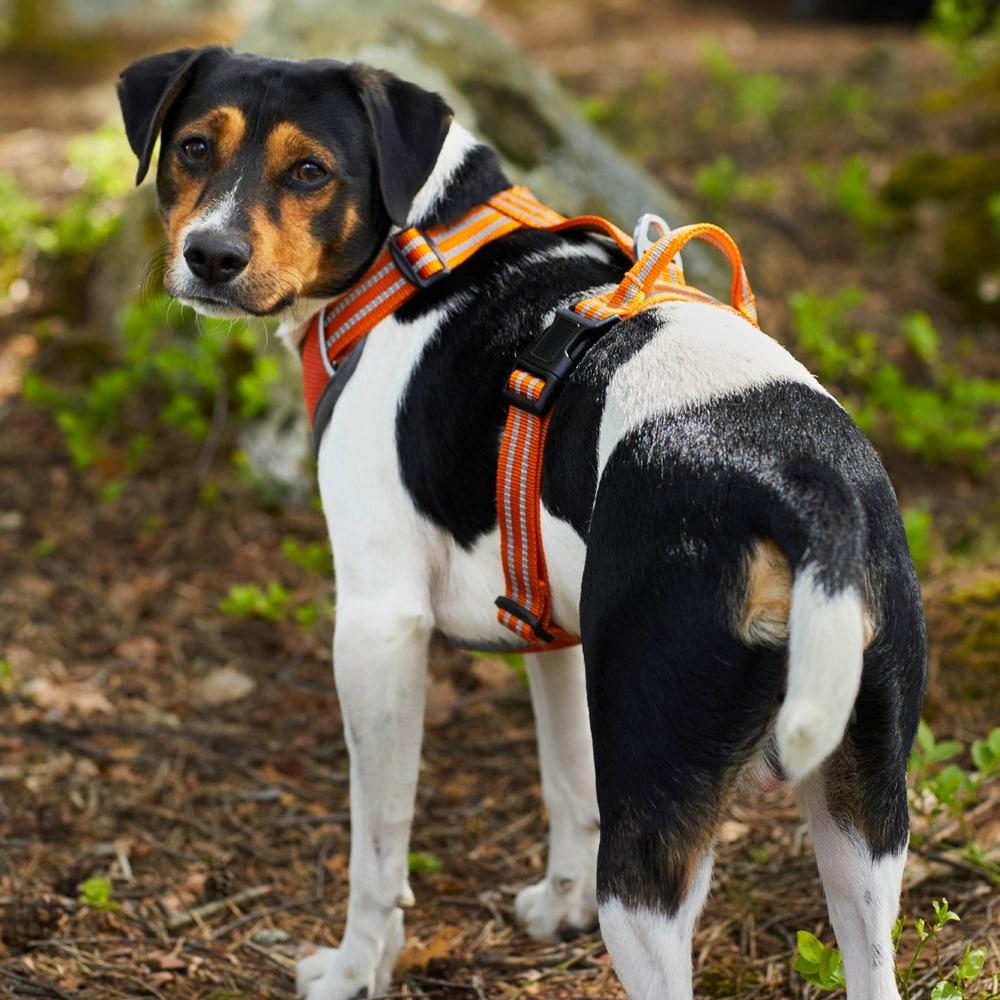 Dog harness  Sparta Showmaster®