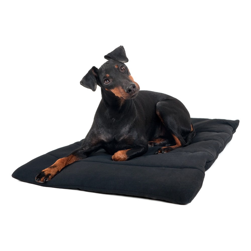 Dog blanket   Back on Track®