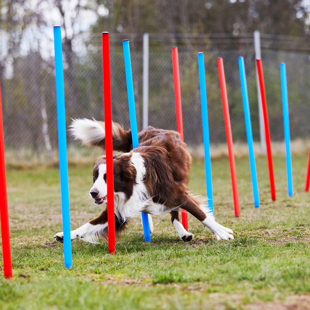 Agility obstacle   Showmaster®