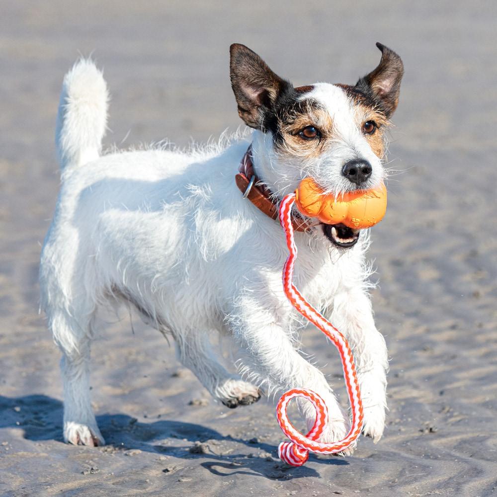 Dog toy  Aqua Kong®