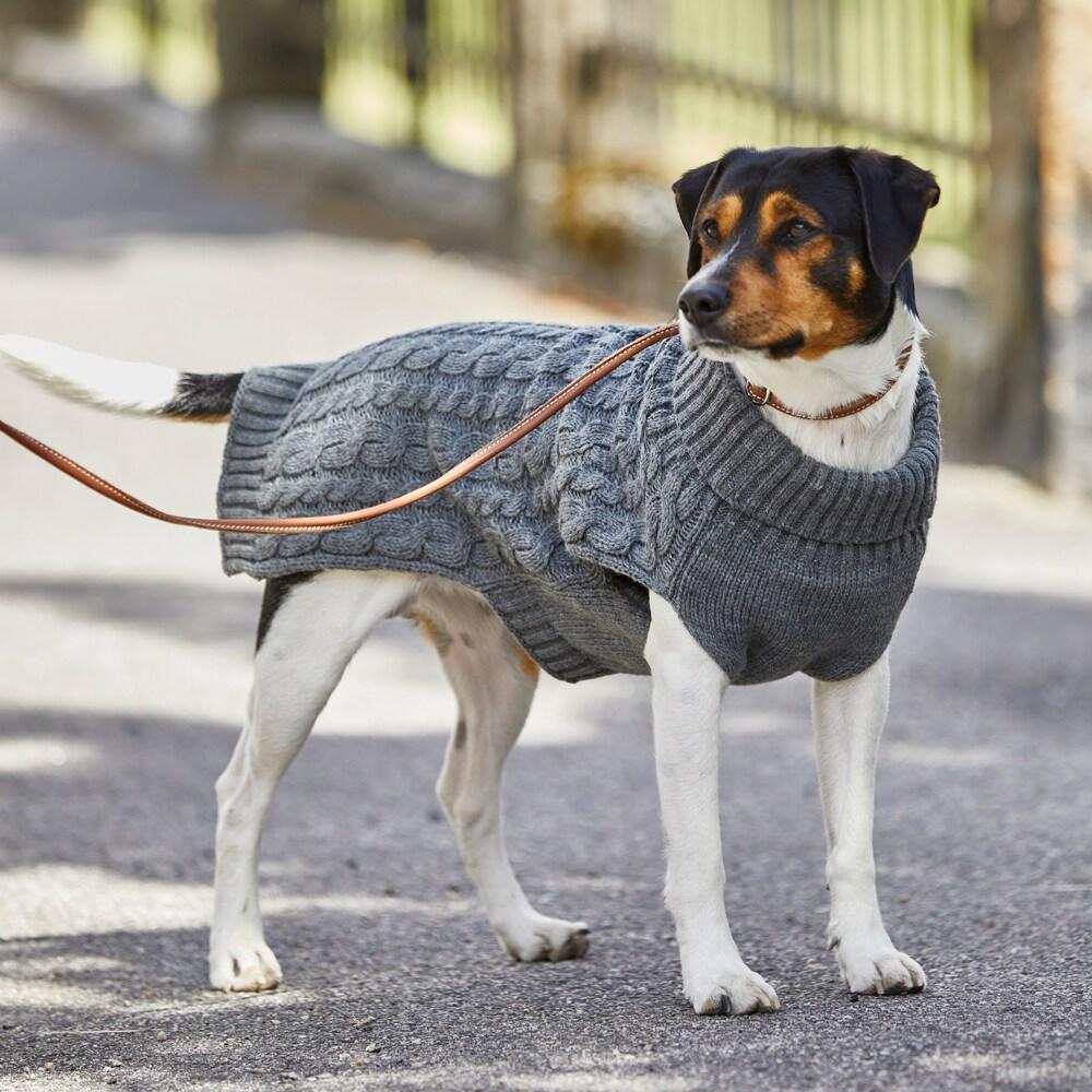 Dog jumper  Robin Showmaster®
