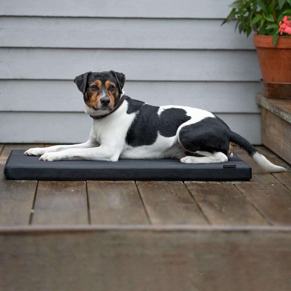 Dog mattress   Showmaster®