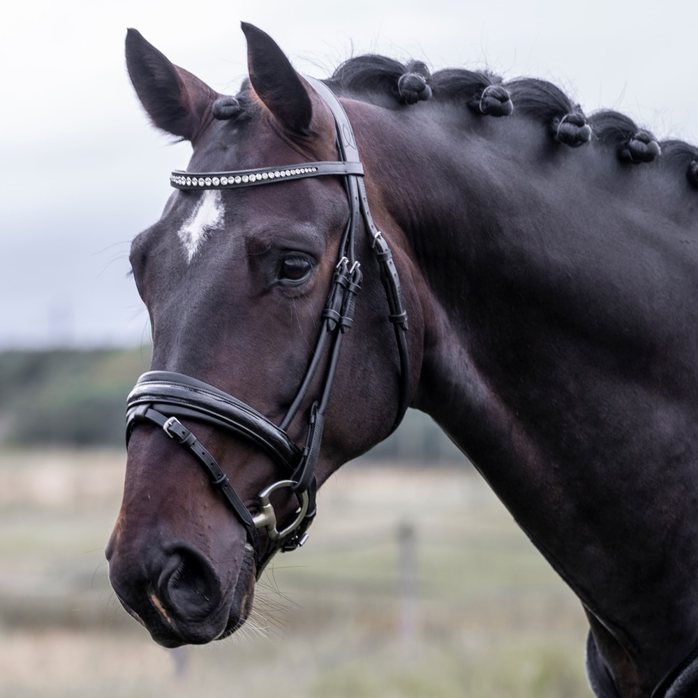 Combined noseband bridle  Vernio JH Collection®