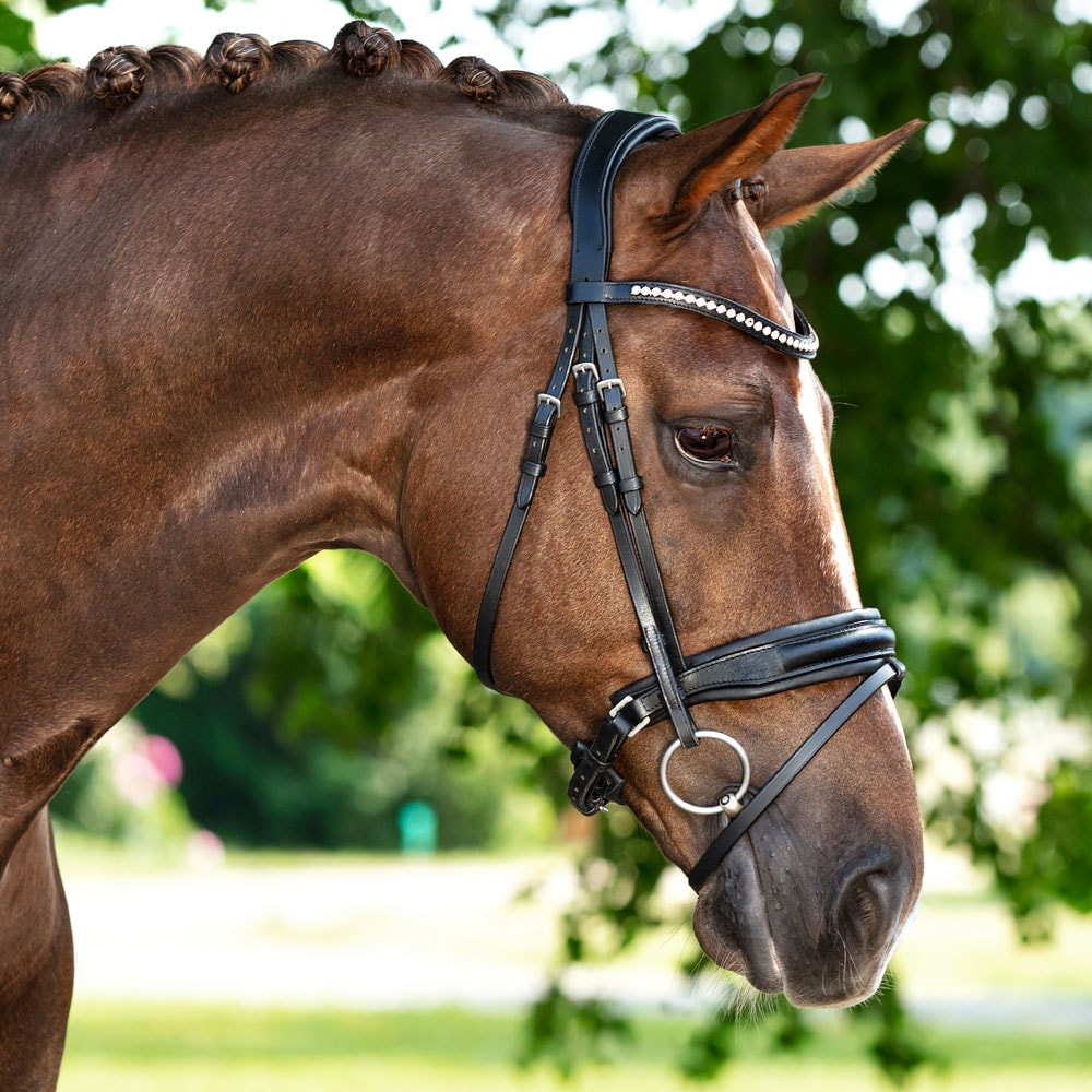 Combined noseband bridle  Halmore Fairfield®