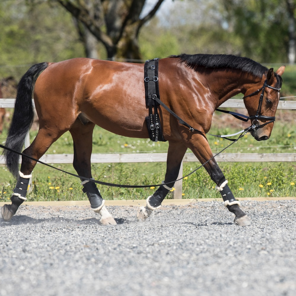 Lunging girth   Fairfield®