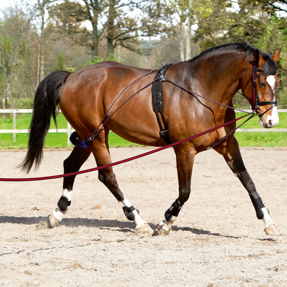 Lunging system   Fairfield®