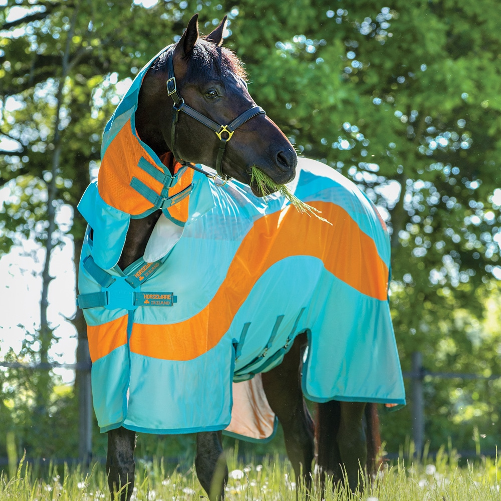 Fly rug  Amigo Evolution Horseware®