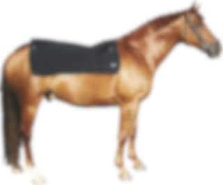 back on track häst