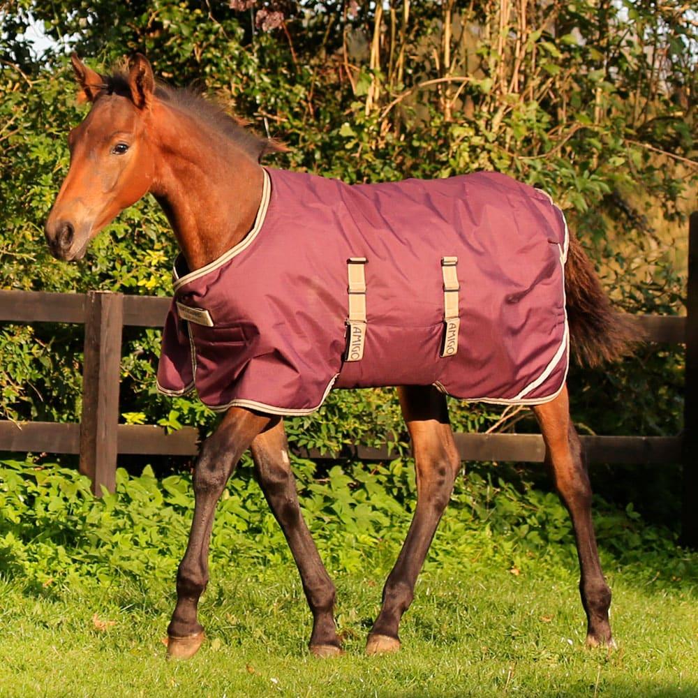 Foal rug  Amigo Foal Rug Horseware®