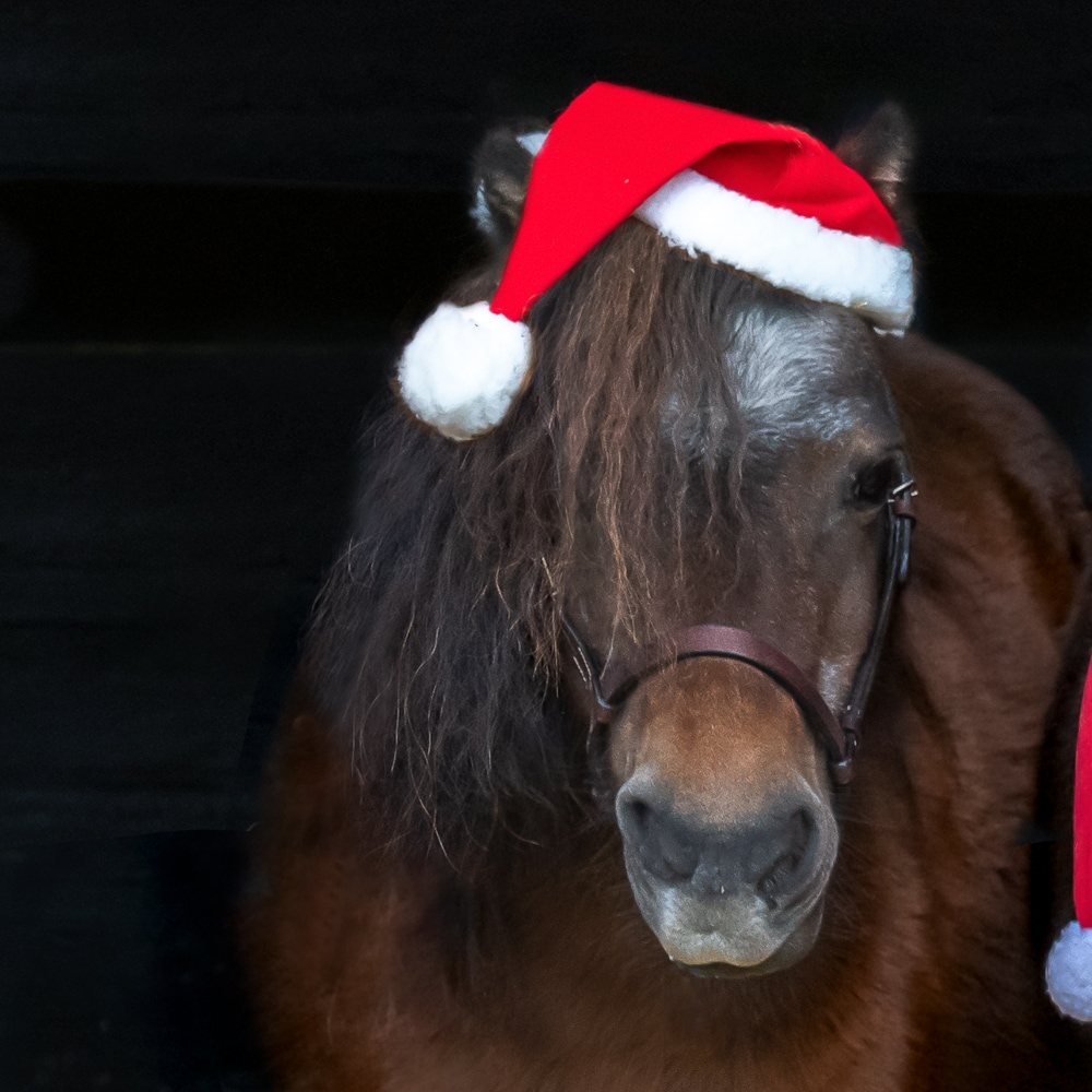 Christmas horse hat   Fairfield®